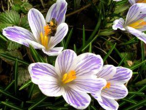 spring-flowers1