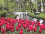 spring has sprung Keukenhof09